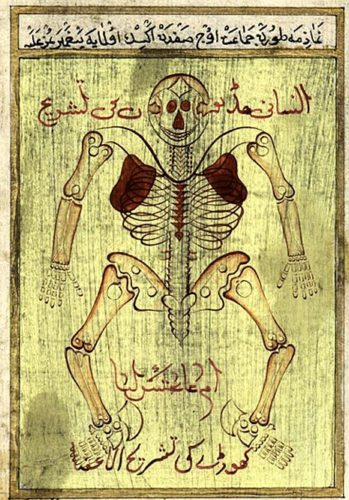 Anatomy of the skeleton, attributed to Avicenna (Persian, c. 980-1037).